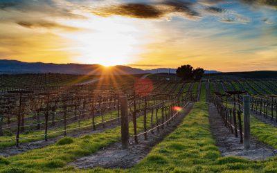 Creating Your Daytime Excursion – Lodi